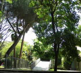 Sassari Abbattimento di un pino ai giardini pubblici