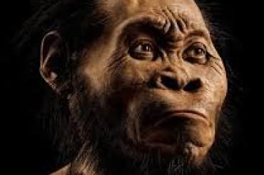 Sudafrica una nuova specie umana: Homo Naledi