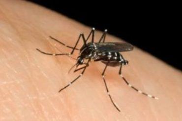 Febbre del Nilo: contaggio e difusione ecco come