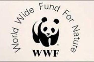 DDL RANDAGISMO, WWF: OTTIMA INNOVAZIONE LA BANCA DEL DNA DEI CANI NON STERILIZZATI