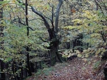 Shinrin yoku, il bagno nel bosco