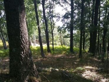 Cotronei Denunciato un uomo per abbattimento e furto di alberi
