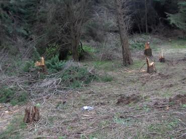 Soverato e Isola Capo Rizzuto denunce per abbattimento alberi