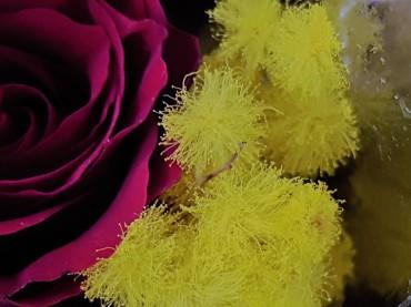 8 marzo Auguri Festa della Donna