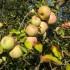 Frutta antidepressivo naturale. Lo dice uno studio spagnolo