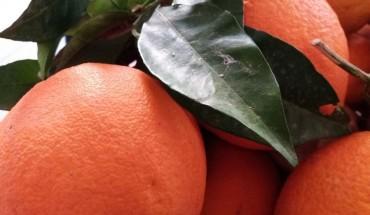 arance,biologico,cibo