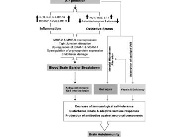 Medicina: sclerosi multipla innescata dalle PM10