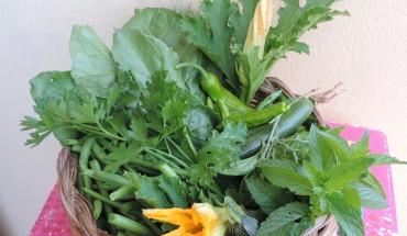 verdura,