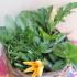 Frutta e verdura, meglio dieci porzioni al giorno