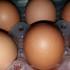 Scandalo uova al fipronil, il Ministero salute pubblica i chiarimenti