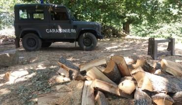 Mesoraca_furti di legna