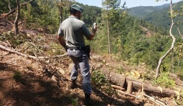 Mesoraca_furti di legna (2)