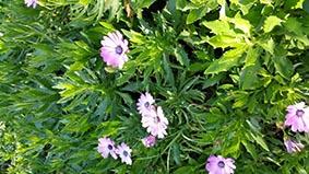 fiori(FILEminimizer)