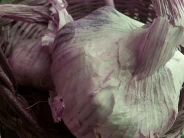 Un nuovo studio rivela le proprietà dell'aglio per combattere le infezioni