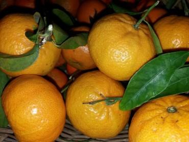 Elogio del mandarino Un toccasana per la nostra salute