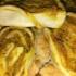 Le girelle alla zucca, secondo vegetariano