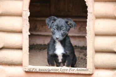 """Associazione Love For Animals,  """"Lazio – Emergenza cuiccioli"""""""