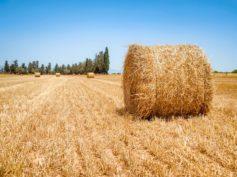 Legge Agricoltura sociale, soddisfazione di Fedagri e Federsolidarietà Puglia