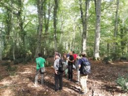 Gargano, studiosi dal mondo nelle faggete UNESCO della Foresta Umbra