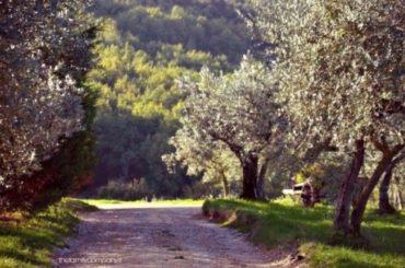 Frantoi Aperti 2015: in Umbria sarà l'anno dei buoni frutti