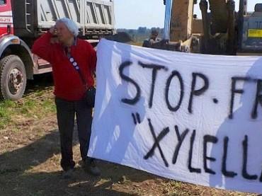 Xylellagate:  uno scandalo internazionale ormai sulla bocca di tutti.