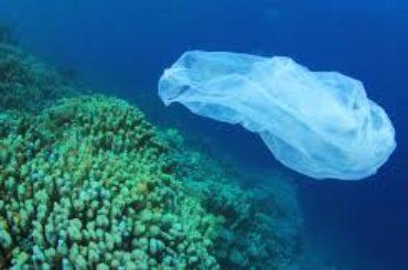 Inquinamento: due terzi degli uccelli marini hanno spazzatura di plastica nello stomaco