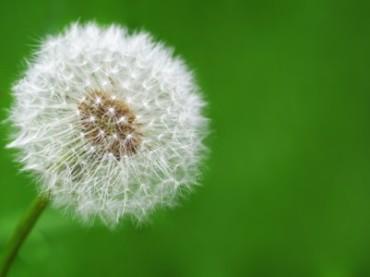 Simposio Internazionale Yakult-il ruolo del probiota nelle alleregie