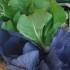 La dieta mediterranea migliora la qualità della vita