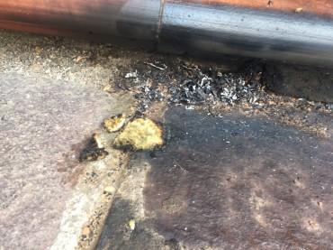 Belvedere Spinello : ragazzino brucia nido d'ape