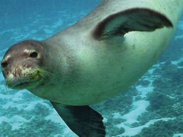 turisti leccesi filmano esemplare di foca monaca nella acque ioniche della baia di Lefkas in Grecia