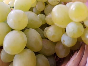 Schiacciata di uva, dolce autunnale