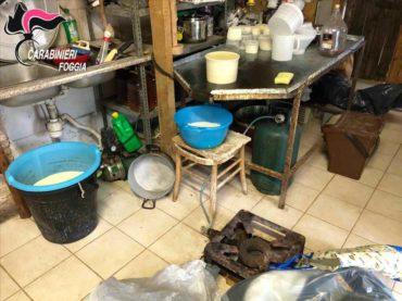 """Allevamento """"lager"""" a San Marco in Lamis. Si producevano abusivamente prodotti caseari. Rinvenuti  bovini affetti da """"tubercolosi bovina"""""""