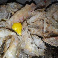 Le canocchie gratinate, l'antipasto per l'8 dicembre
