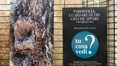 """""""Pareidolia"""" la mostra di Carlo Toma a Mosca per raccontare gli ulivi magici del Salento"""